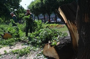 Cтихия в Петербурге: 390 поваленных деревьев, сломанная телебашня и порванные экраны «Алых парусов»