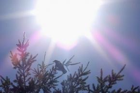 Синоптики передумали: июль будет жарким