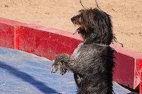 В ЦПКиО собак учат цирковым трюкам