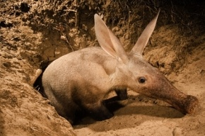Ученые: В новом зоопарке животные будут гибнуть от влаги с юнтоловских болот и ядовитых выхлопов ЗСД