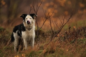 В Ленобласти девятиклассница ушла гулять с собакой и пропала