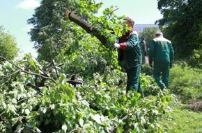 В Петербурге деревья падают на людей: один погиб