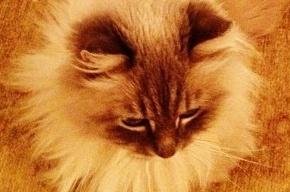 Медведев показал своего знаменитого кота Дорофея