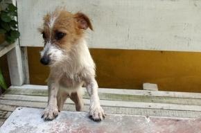 В Петербурге бесследно исчез убийца бездомных собак
