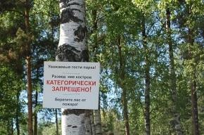 В список особо охраняемых объектов Петербурга попадет Сосновка