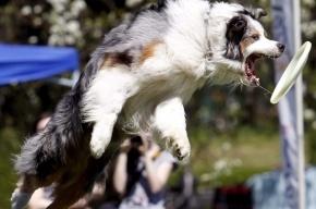 Перед Международным экономическим форумом полиция собирает информацию о собаках петербуржцев