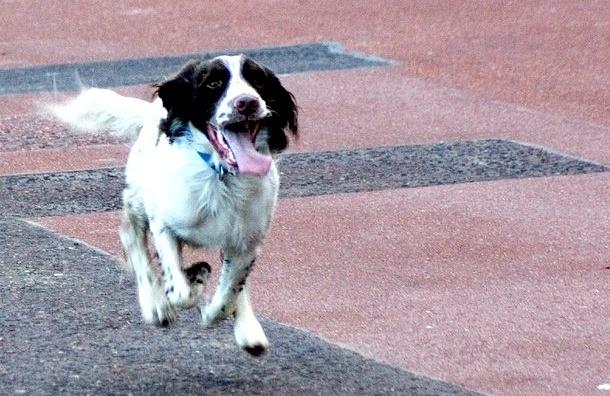 Зоозащитники предлагают Полтавченко завести собаку