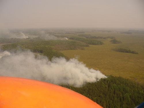 Лесные пожары в Томской области : Фото