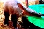 В новом зоопарке хотят сделать «зоотеатр», но мешают этические проблемы
