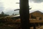 Демьяново: перестрелка с дагестанцами довела главу поселка до отставки