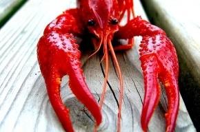 Гоша Куценко спас от съедения омара в петербургском ресторане и отдал его в океанариум