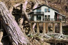 Деревья в Ленобласти, уцелевшие после страшного урагана, рубят ради коттеджей