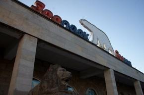 В петербургском зоопарке потерялась 12-летняя девочка в розовом