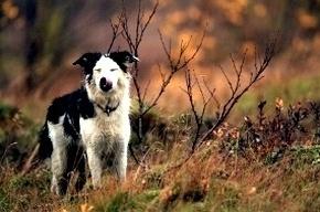 Пенсионер отправился искать пропавшую собаку и сам бесследно исчез