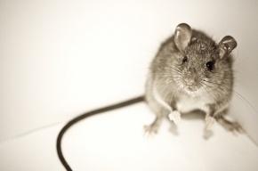 Финские геи наградили Полтавченко «Почетной крысой»