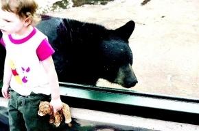 «Девочка в розовом» из Ленинградского зоопарка нашлась живой и невредимой