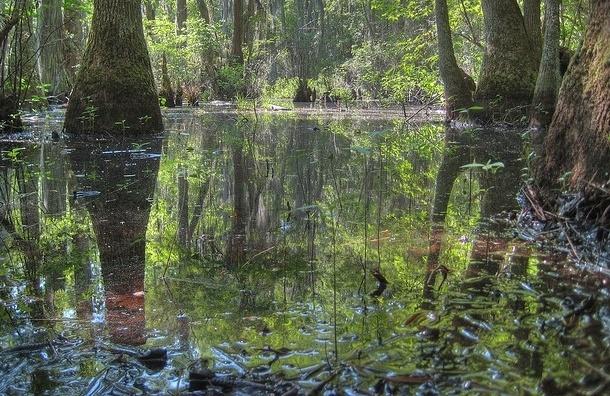 Пенсионерка едва не утонула в болоте неподалеку от Сертолово