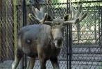 Фоторепортаж: «Ленинградский зоопарк »