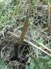 На месте будущего зоопарка в Юнтолово пытаются убить редкое растение: Фоторепортаж