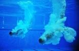 Фоторепортаж: «Прыгуны в воду Захаров и Кузнецов»