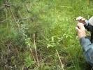 Фоторепортаж: «На месте будущего зоопарка в Юнтолово пытаются убить редкое растение»