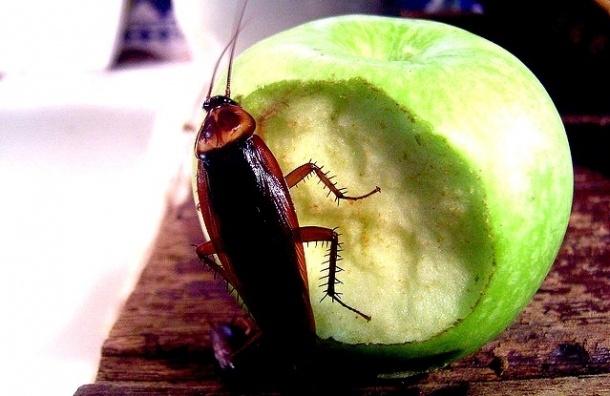 В «Народном» нашли мух, тараканов и кучи окурков