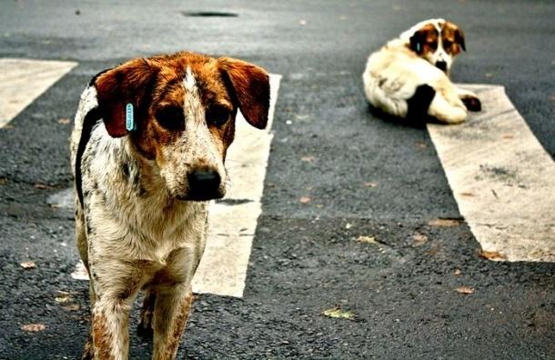Губернатор-пацифист Дрозденко решил строить в Ленобласти приюты для животных
