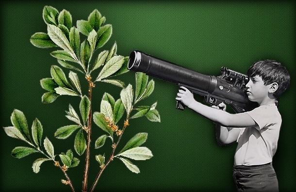 В будущем зоопарке Петербурга неизвестные убивают редкое растение