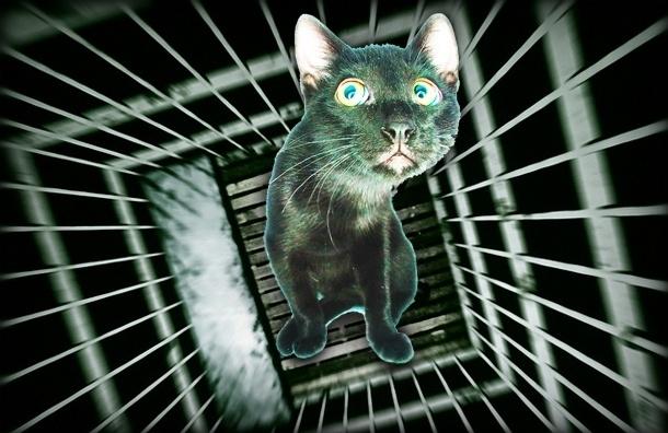 В Петербурге кошек не пускают в подвалы - крысы рады