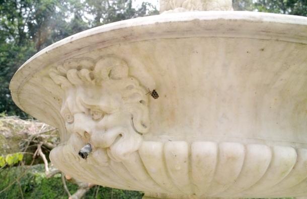 Смольный серьезно взялся за фонтаны: заброшенные восстановят, новые построят