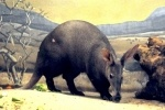 Чиновники Смольного поспорили из-за непостроенного зоопарка