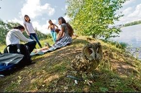 В Строгино пропала сова