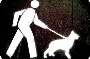 Конфликт пьяного пешехода и собаковода завершился стрельбой