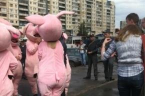 В магазине «Народный» из-за движения «Хрюши против» изъяли 112 кг порченой еды
