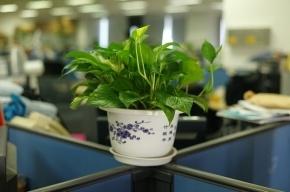 10 советов как создать экологичный офис