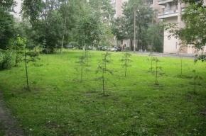 Сосны на улице Димитрова погибают от косилок