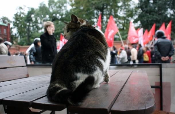 «Марш миллионов» в Петербурге: было тихо, скучно и холодно