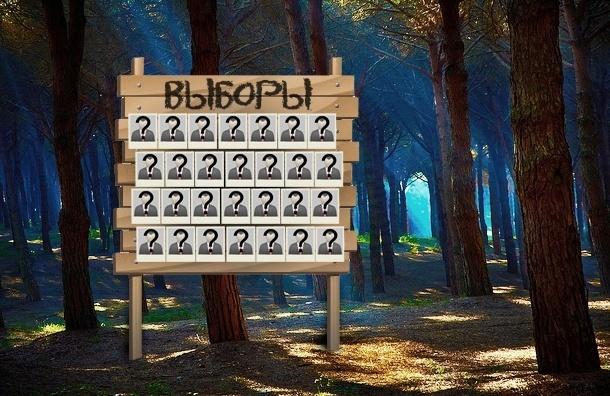 Под Петербургом предвыборная аномалия: кандидатов в депутаты снимают десятками