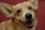 Умерла собака королевы Елизаветы, снявшаяся в ролике Олимпиады 2012