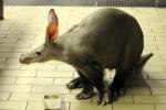 Новый зоопарк хотят построить не в Юнтолово, а в Купчино