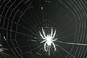 Из-за редкого паука могут отменить строительство дороги за 15 миллионов долларов