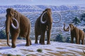 В России могут клонировать мамонта
