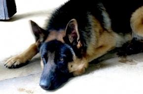 Полицейский избил пенсионера, который пытался утихомирить его собаку