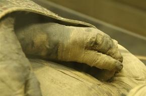 На чердаке петербургского вуза нашли мумифицированную руку
