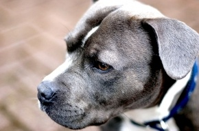 В Петербурге предложили запретить выгуливать собак без паспорта
