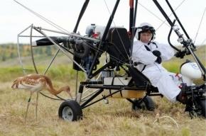 Путин: Стерхи-слабаки не сразу полетели за вожаком, тот взял слишком быстрый темп
