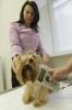 Фоторепортаж: «Полтавченко, ветеринарная станция, клиника, 12 октября 2012»