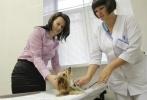 Полтавченко, ветеринарная станция, клиника, 12 октября 2012: Фоторепортаж