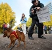 Выборы в координационный совет оппозиции : Фоторепортаж