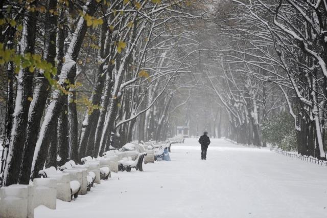 первый снегопад в Петербурге: Фото